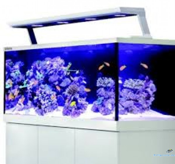 Red Sea Max S 650 Meerwasseraquarium mit LED Komplett-Set 7