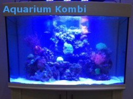 meerwasseraquarium im online shop kaufen meerwasseraquarium shop riffgrotte. Black Bedroom Furniture Sets. Home Design Ideas